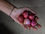 few red onions
